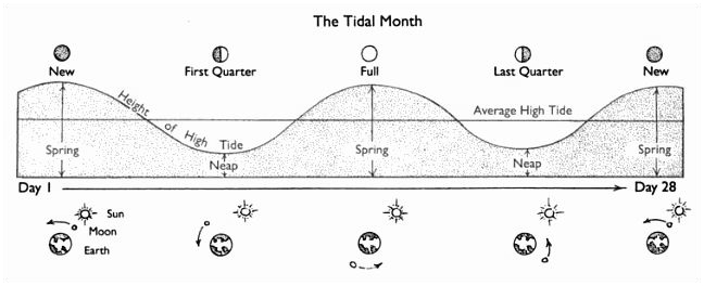 Spring Neap And Proxigean Tides
